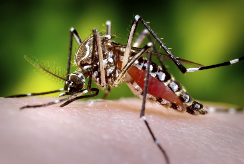 Health Risks in Costa Rica - ExpetFinder Articles